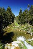 Paulina_Falls_162_06272021 - Looking downstream from the road bridge over Paulina Creek