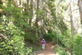 Pearsony_Falls_043_07152016 - Mom hiking back up towards the parking lot for Pearsoney Falls