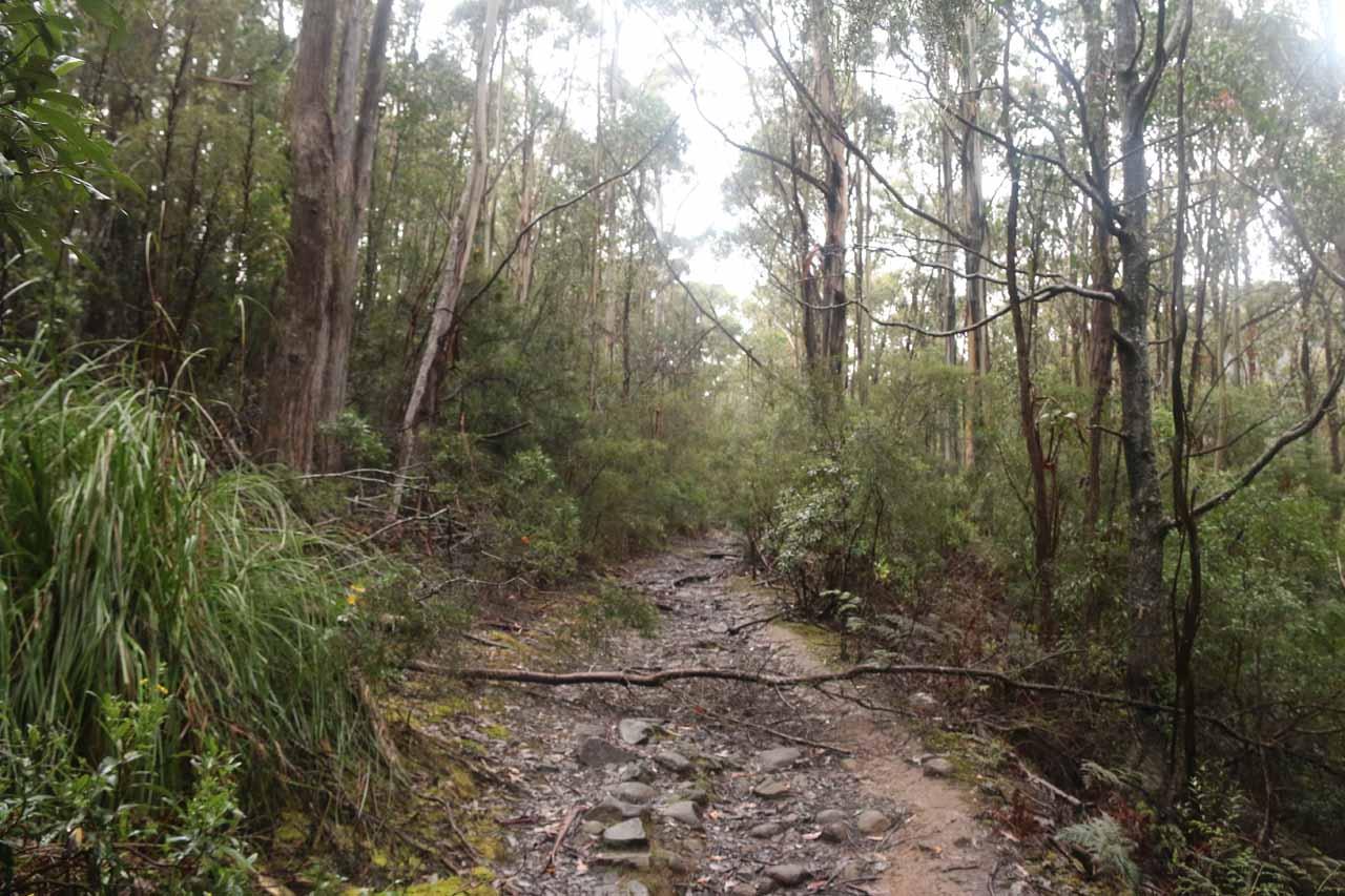 Still following along the Pelverata Falls Track