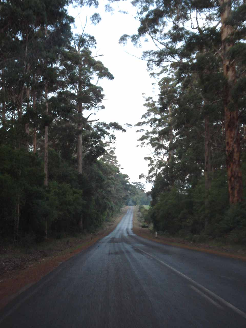 Driving on the wooded roads towards Northcliffe from Pemberton