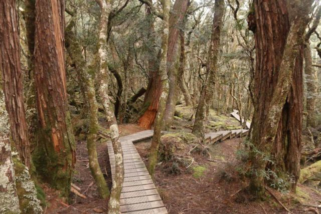 Pencil_Pine_Knyvet_Falls_048_11302017 - The boardwalk path between Pencil Pine Falls and Knyvet Falls as it meandered alongside Pencil Pine Creek