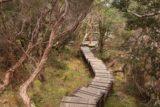 Pencil_Pine_Knyvet_Falls_061_11302017 - Finally approaching the Knyvet Falls Lookout during my late November 2017 visit