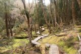 Pencil_Pine_Knyvet_Falls_086_11302017 - Heading back through this opening on the way up to the trailhead by Cradle Mountain Lodge on my late November 2017 visit