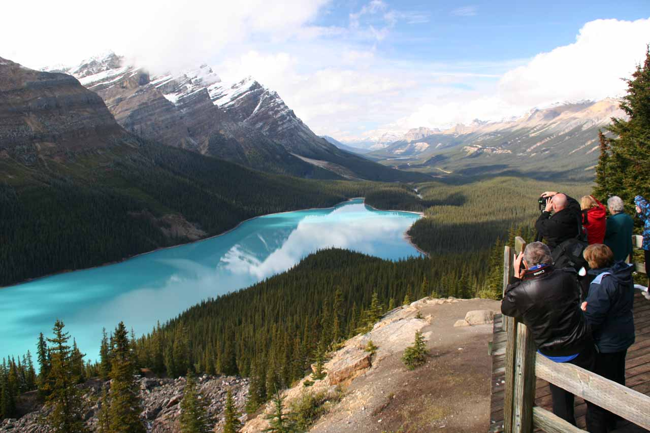 The crowded overlook for Peyto Lake