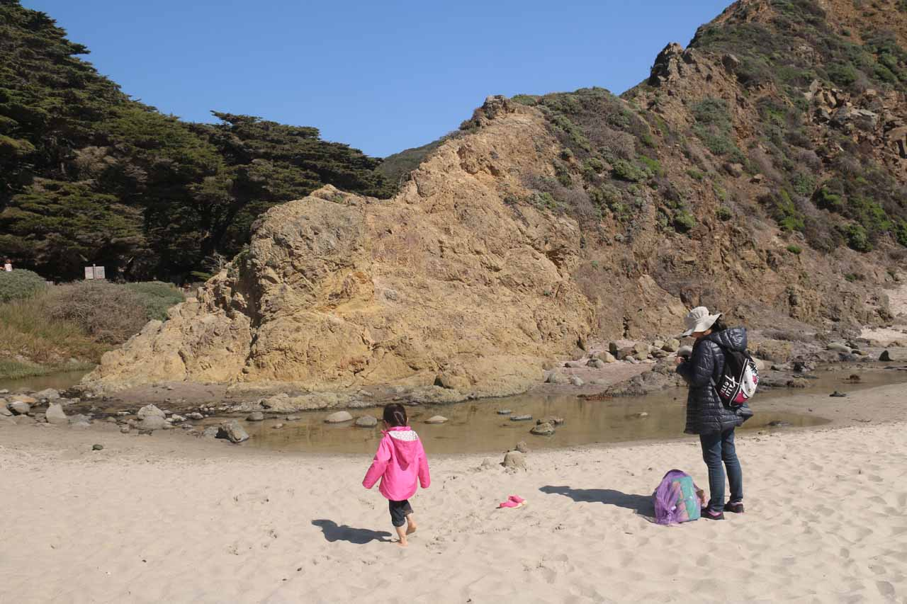 Tahia playing in the sand next to a freshwater stream at Pfeiffer Beach