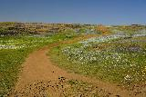 Phantom_Falls_036_04092021 - Continuing along the Phantom Falls Trail as it was surrounded by wildflowers. Granted early April 2021 didn't have the greatest display, but it was still impressive nonetheless