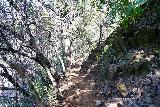Phantom_Falls_061_04092021 - Descending into the ravine towards Ravine Falls