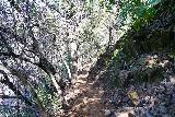 Phantom_Falls_061_04092021 - Following this ledge trail to the base of Ravine Falls