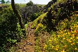 Phantom_Falls_079_04092021 - Towards the top of the ravine, there was a large bloom of California poppies during my early April 2021 visit