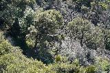 Phantom_Falls_122_04092021 - Looking down the canyon towards another soaring condor gliding near the Phantom Falls Overlook
