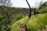 Phantom_Falls_141_04092021 - Going down the narrowing trail leading to the Lower Ravine Falls