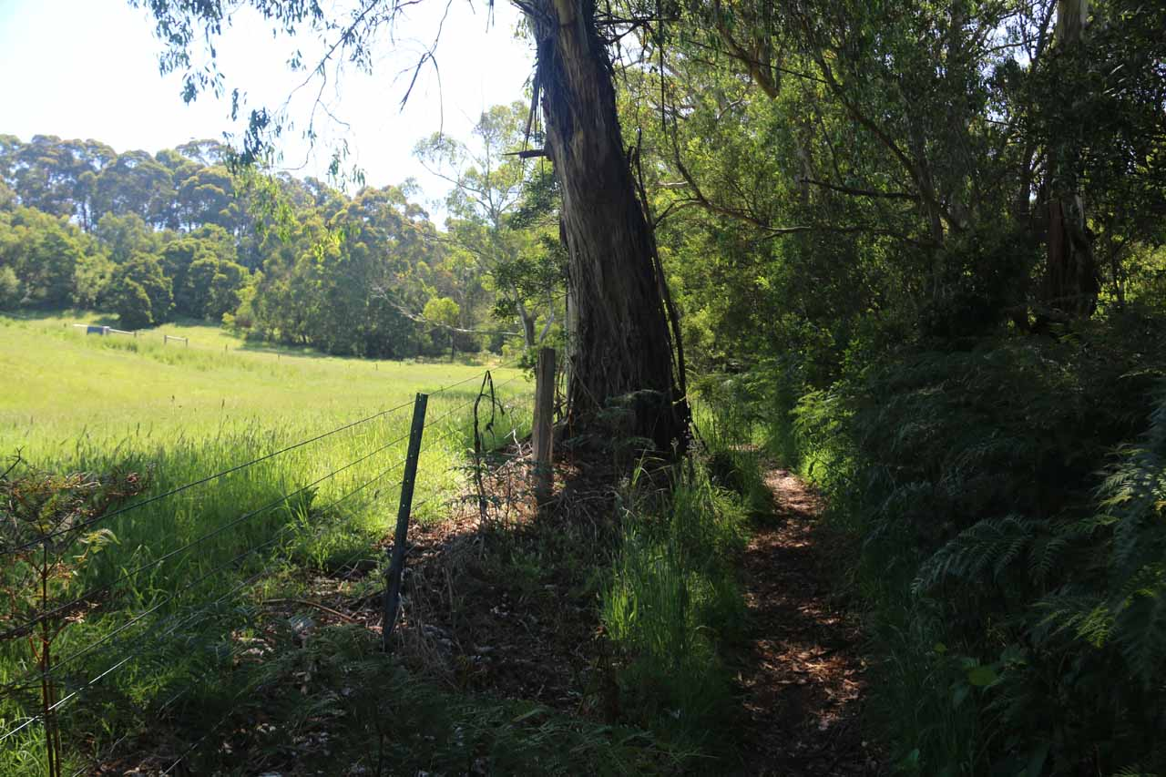 Beyond the private property traverse, the track was sandwiched between the well-vegetated forest surrounding the St George River to the right and the remaining parcels of private property cleared out to the left