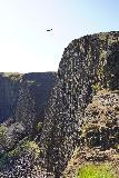 Phantom_Falls_254_04092021 - Looking along the basalt cliffs with a condor soaring near them as seen from the brink of Phantom Falls