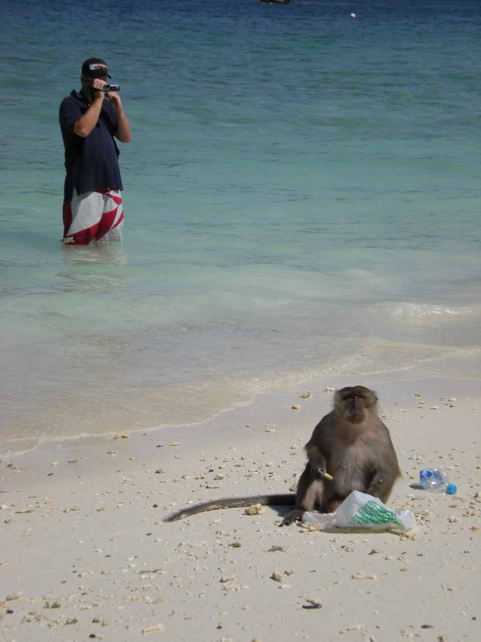 A tourist watches a monkey feeding itself from a banana handout