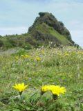 Piha_Beach_009_12022004 - Wildflowers blooming before Lion's Rock