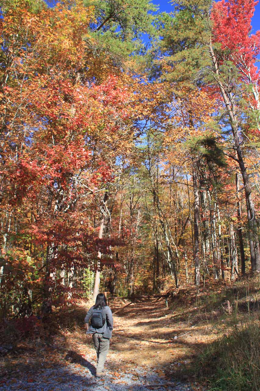 More nice Autumn colors on the trail
