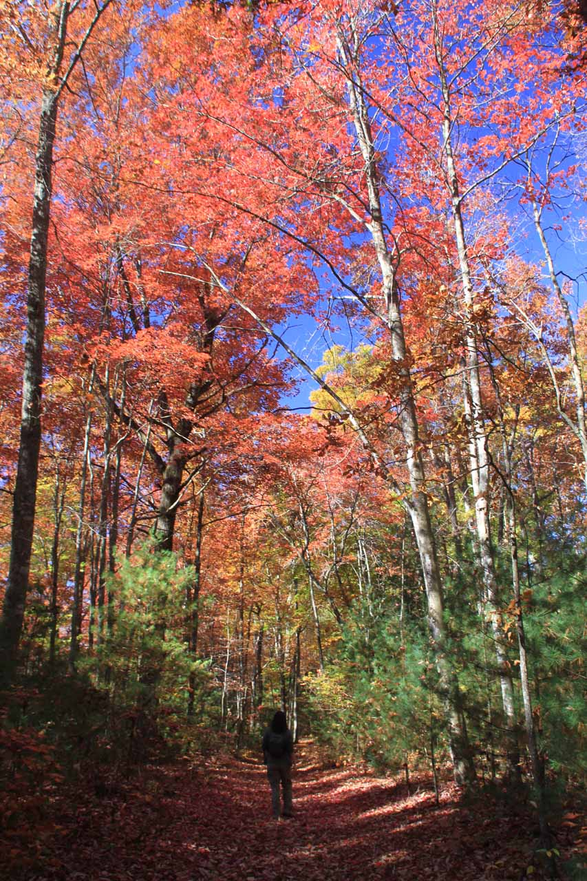 More vibrant colors while hiking on an old road