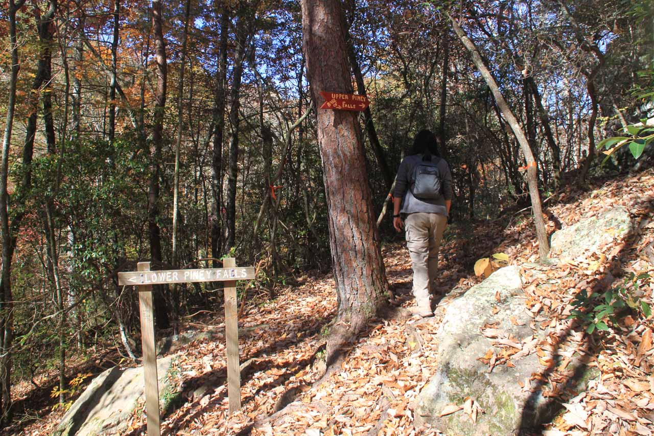 Signed trail junction for Lower Piney Falls