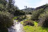 Pinnacles_NP_561_02232020 - In the clearing just downstream of the Pinnacles National Park Employee Residence, this part of Bear Creek was dry