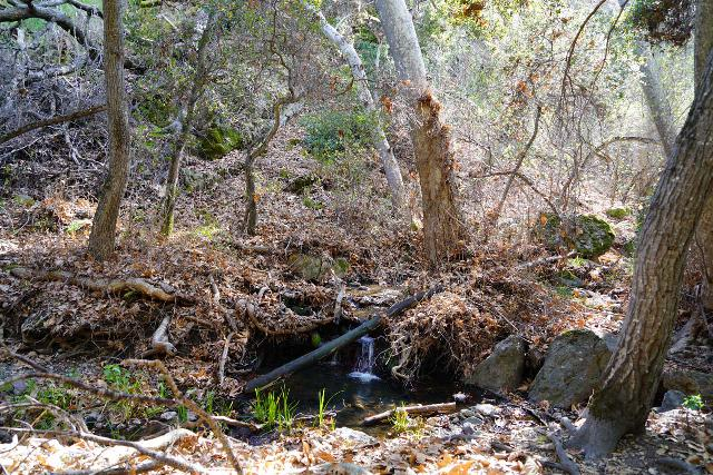 Pinnacles_NP_567_02232020 - Just downstream of Bear Gulch Falls near the footbridge with a '4' labeled on it, I noticed that Bear Creek had water again as evidenced by this tiny cascade
