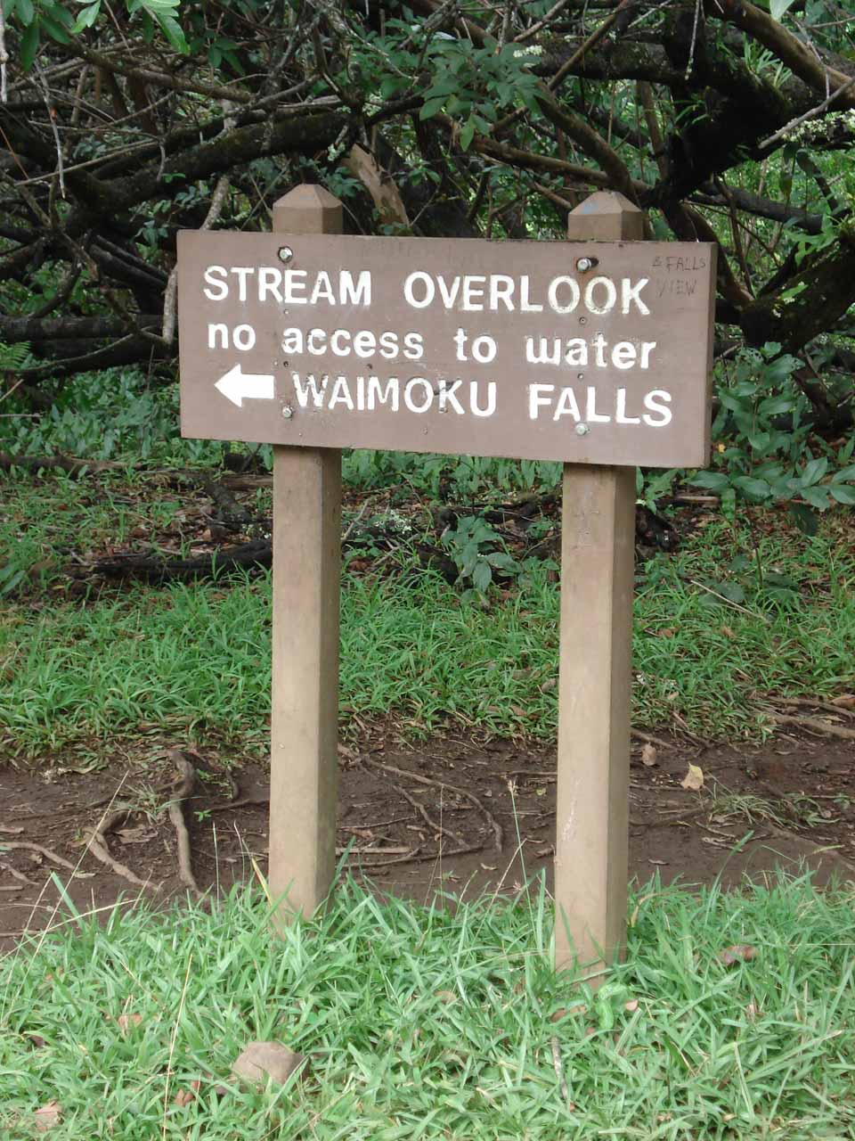 Stream Overlook sign past the banyan tree