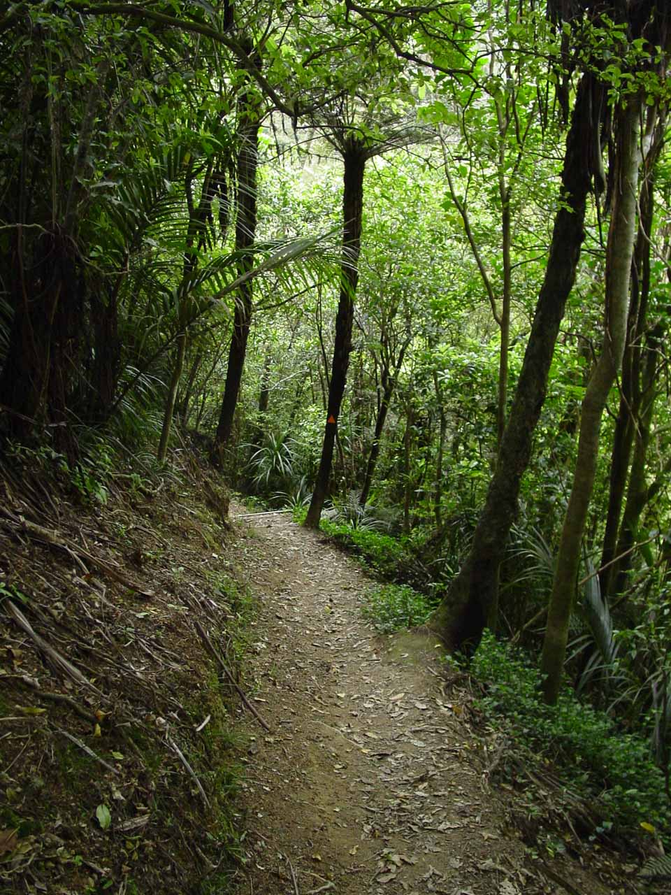 The track descending from the Gorge Road to the Ahuroa River