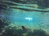 Piula_Cave_Pool_004_goPro_11132019 - Another underwater shot of the fish in the Piula Cave Pool