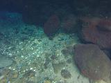 Piula_Cave_Pool_006_goPro_11132019 - A bunch of fish gathered about a corner of the Piula Cave Pool