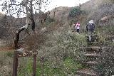 Placerita_Canyon_033_01192019 - Eventually, the Waterfall Trail briefly climbed up towards a ledge bypassing a lot of the poison oak and debris from flash floods and other consequences of being in the wash down below