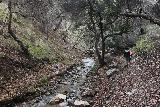 Placerita_Canyon_044_01192019 - Eventually after the ledge trail rejoined Placerita Creek, the canyon closed in and both the trail and creek were running side by side