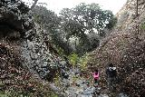 Placerita_Canyon_141_01192019 - The Placerita Creek Falls excursion wasn't over as we still had to stream scramble our way out