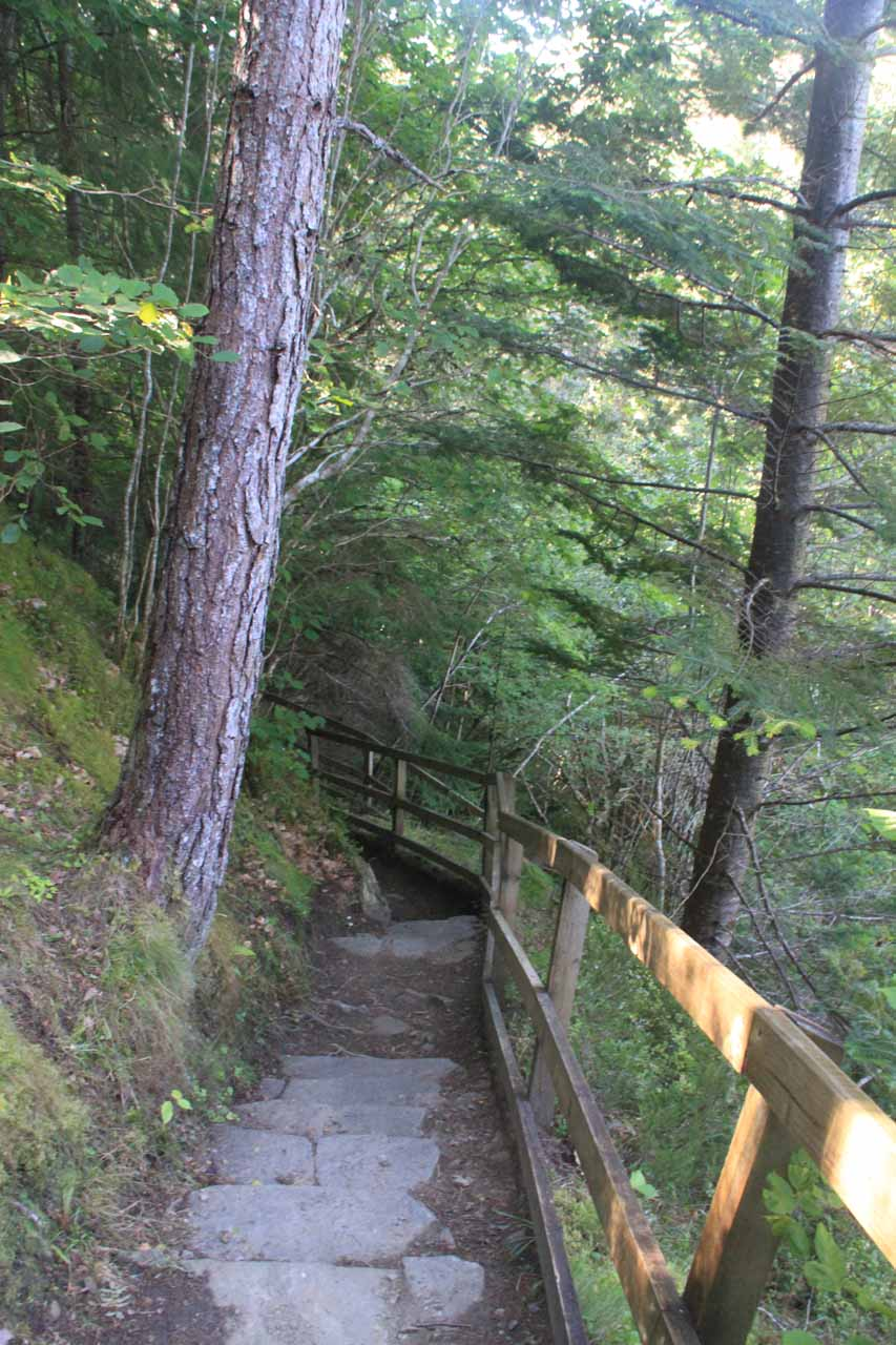 Once we had our fill of the upper viewing platform, we then descended the steps down to the lower lookout for Plodda Falls