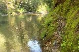 Pomponio_Falls_049_04222019 - The sketchy trail alongside Pescadero Creek leading towards Ponponio Falls