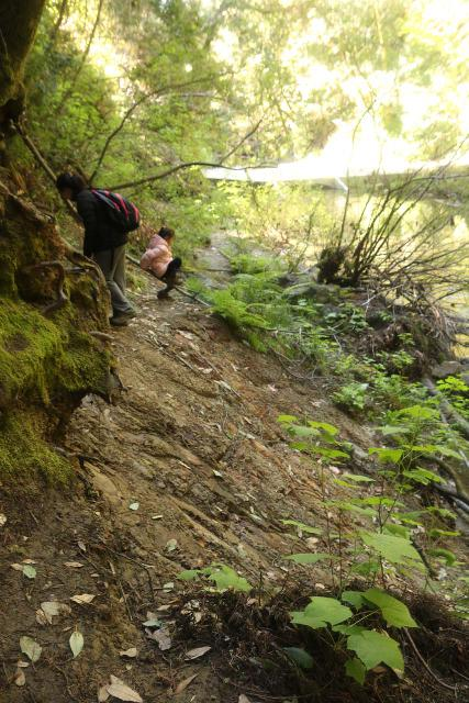 Pomponio_Falls_053_04222019 - The steep and slippery eroded section of the sketchy trail to Pomponio Falls that Julie and Tahia couldn't safely get across