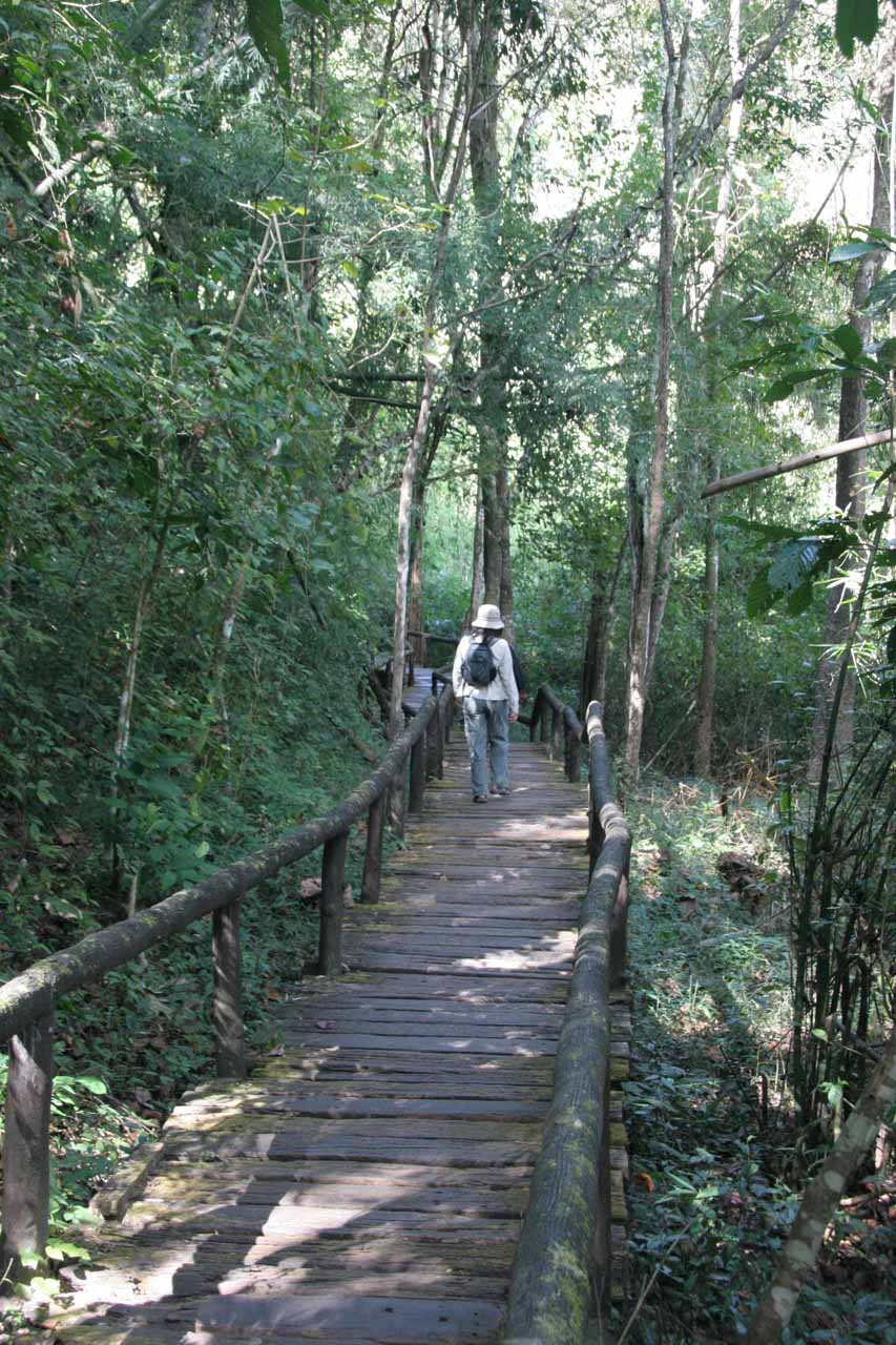Julie walking on a boardwalk in rainforest settings