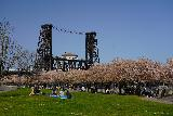 Portland_184_04062021 - Looking back at the context of the Steel Bridge fronted by what's left of the cherry blossoms as seen from near the Friendship Circle part of the Willamette Greenway Trail in downtown Portland