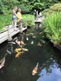 Portland_Japanese_Garden_014_iPhone_08182017 - Some other people checking out the coy pond in the Portland Japanese Garden