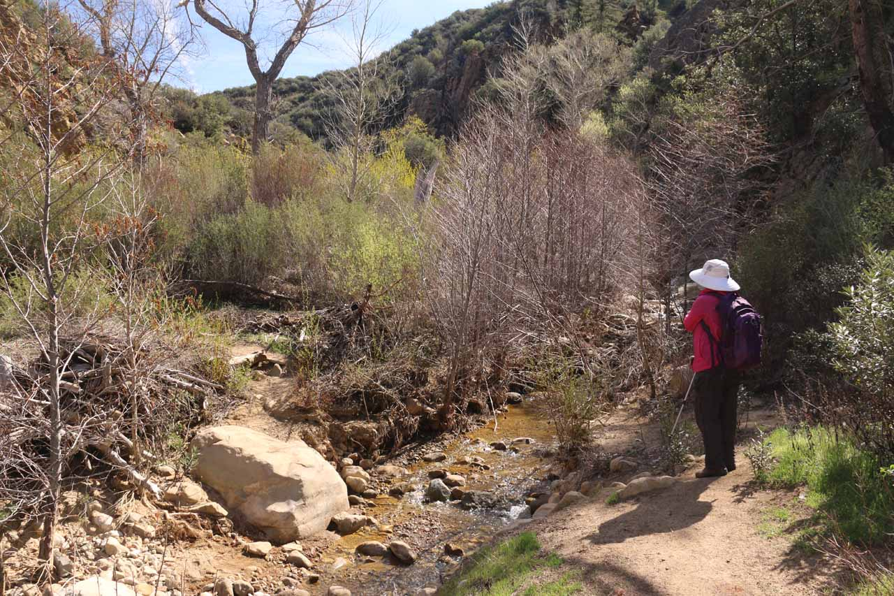 Most of the first 1.6 miles of hiking was pretty straightforward to follow though on some of the stream crossings (like what's shown here), we had to figure out the safest and easiest way to scramble down eroding embankments to get across