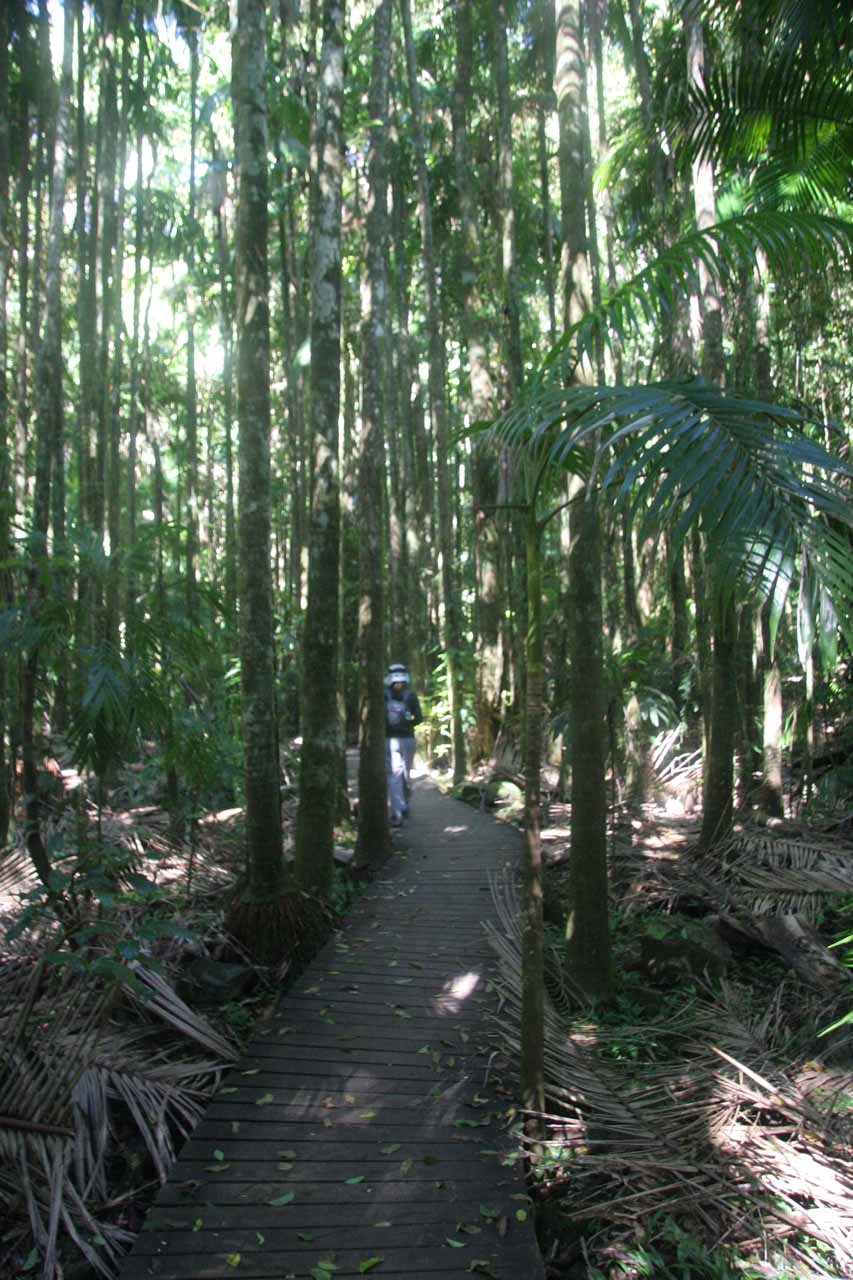 Julie on the boardwalk path early on in the rainforest