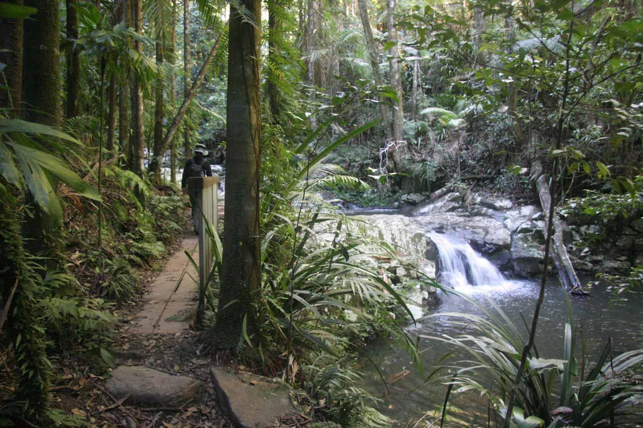 Eventually the path follows alongside the Terania Creek