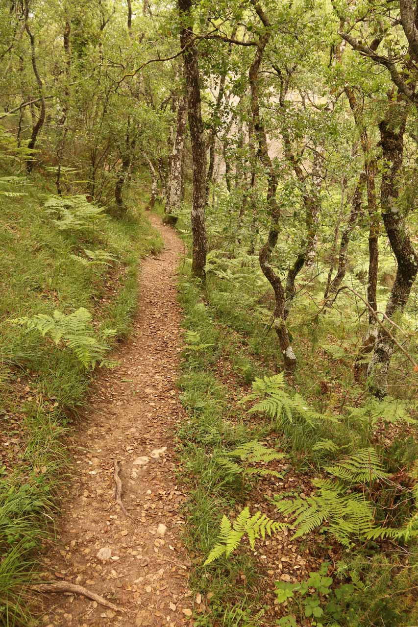 Looking back at the trail as it got narrower and more wooded the closer to the Cascada La Mea we went