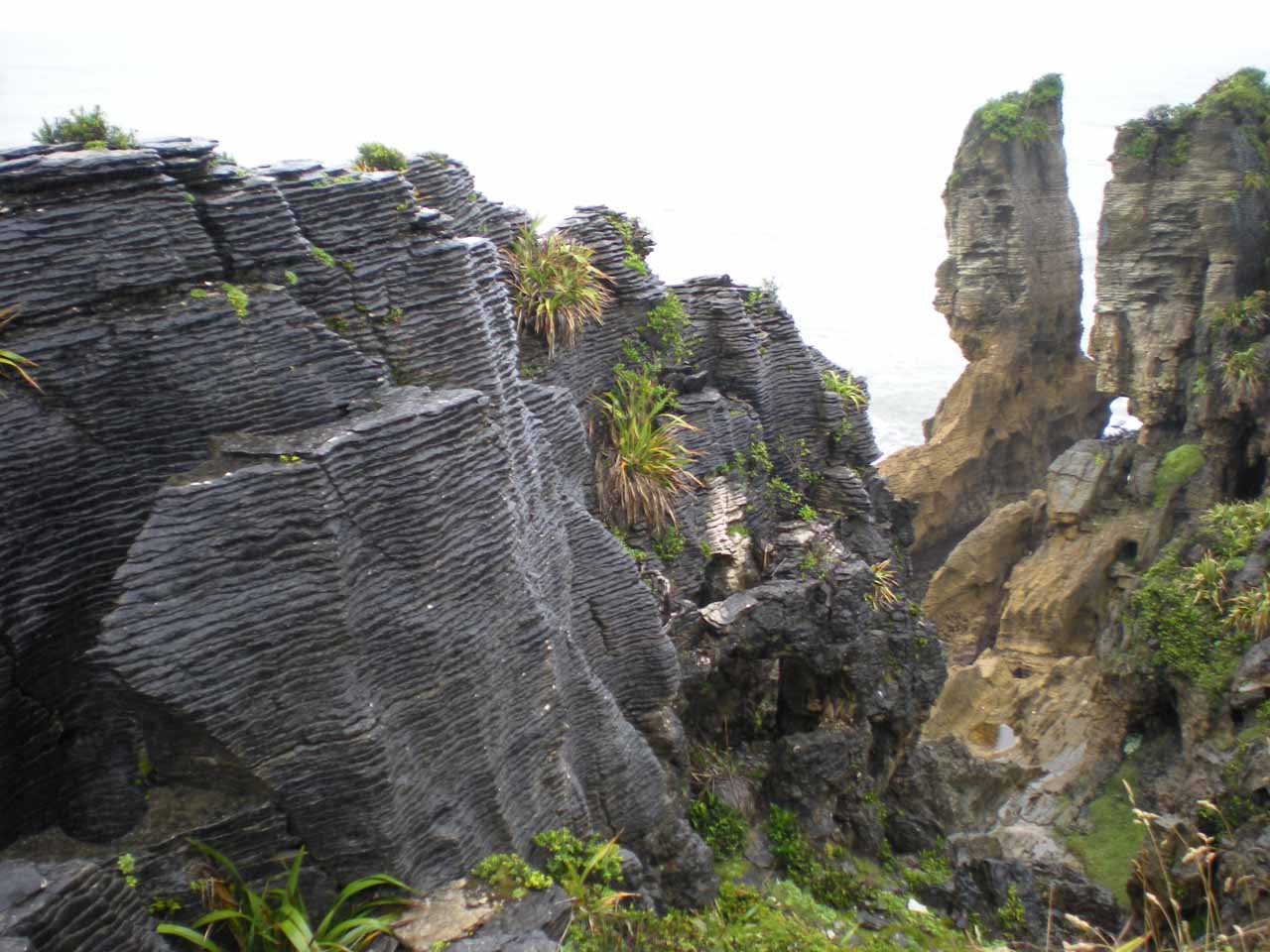 On the drive north from Greymouth through Westport and towards Hector and the Charming Creek Walkway, there was the eccentric Pancake Rocks at Punakaiki (88km south of Hector)