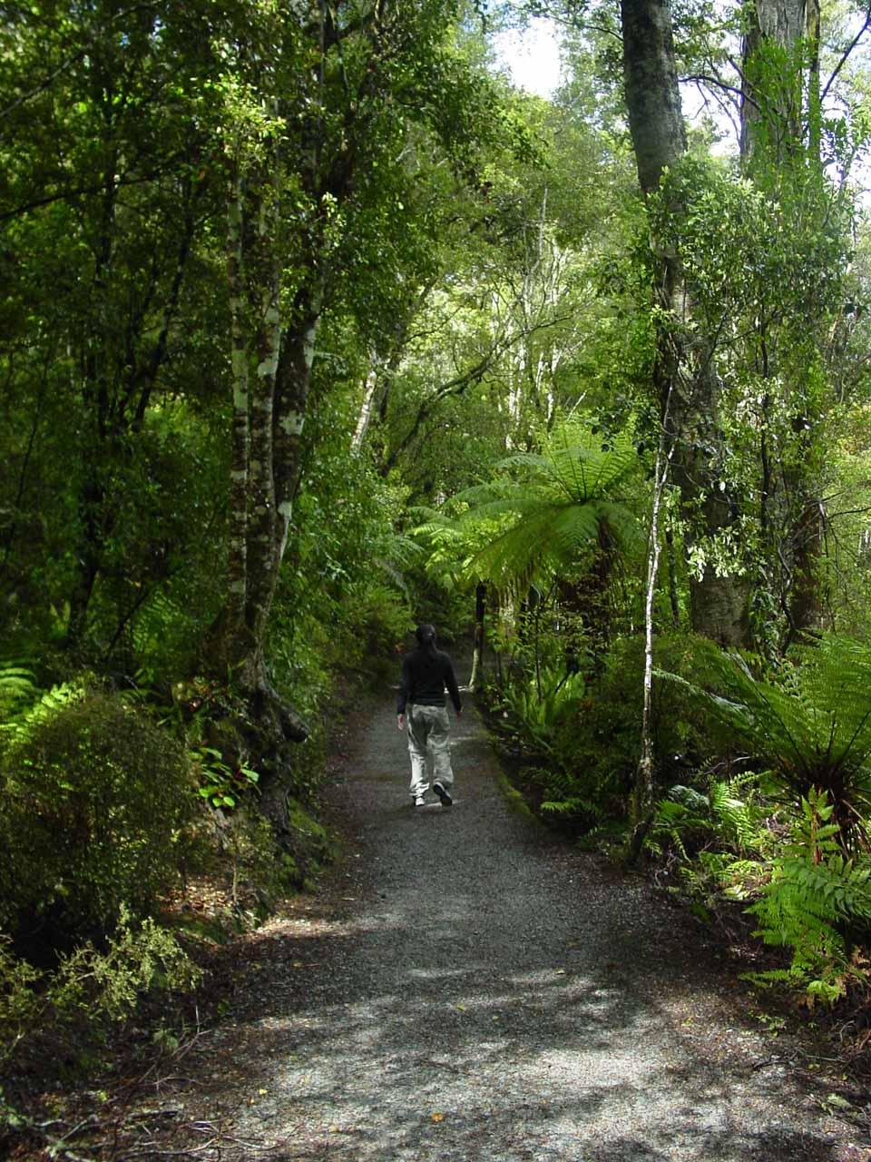 Julie on the pleasant bush walk for Purakaunui Falls