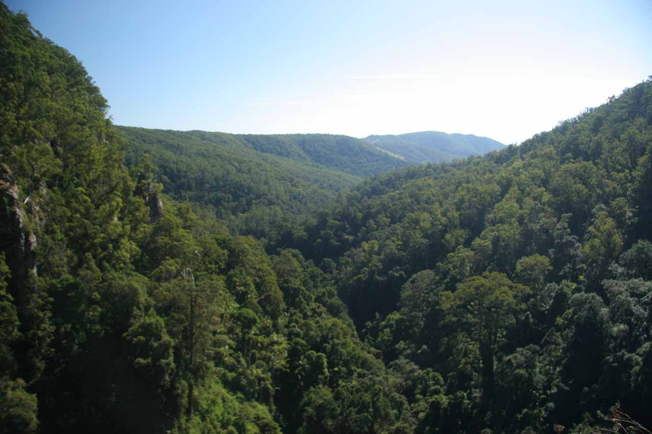 Panoramic view of the rainforest looking downstream from the top of Purling Brook Falls