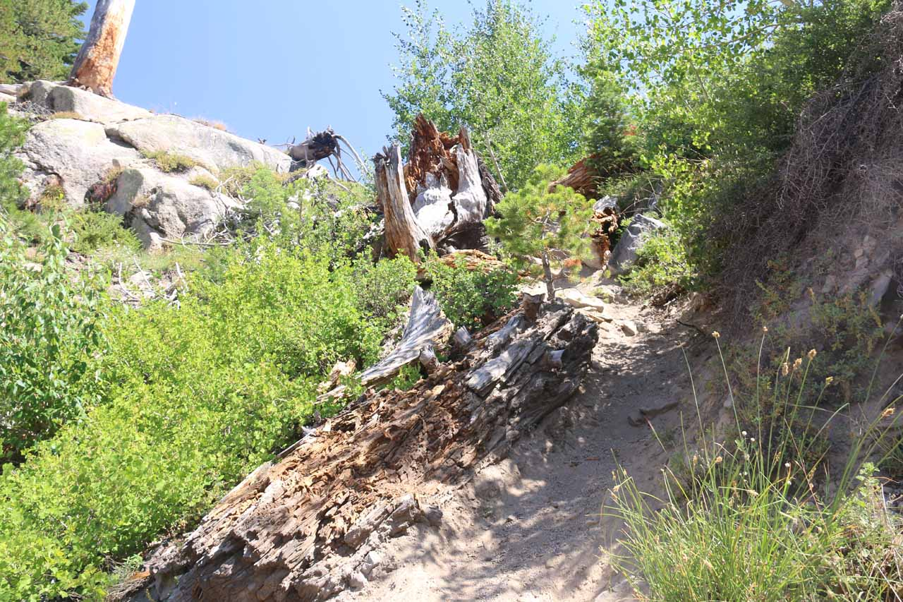 Looking back up at the steep scramble on a sandy and overgrown use-trail to get to the plunge pool before Lower Falls