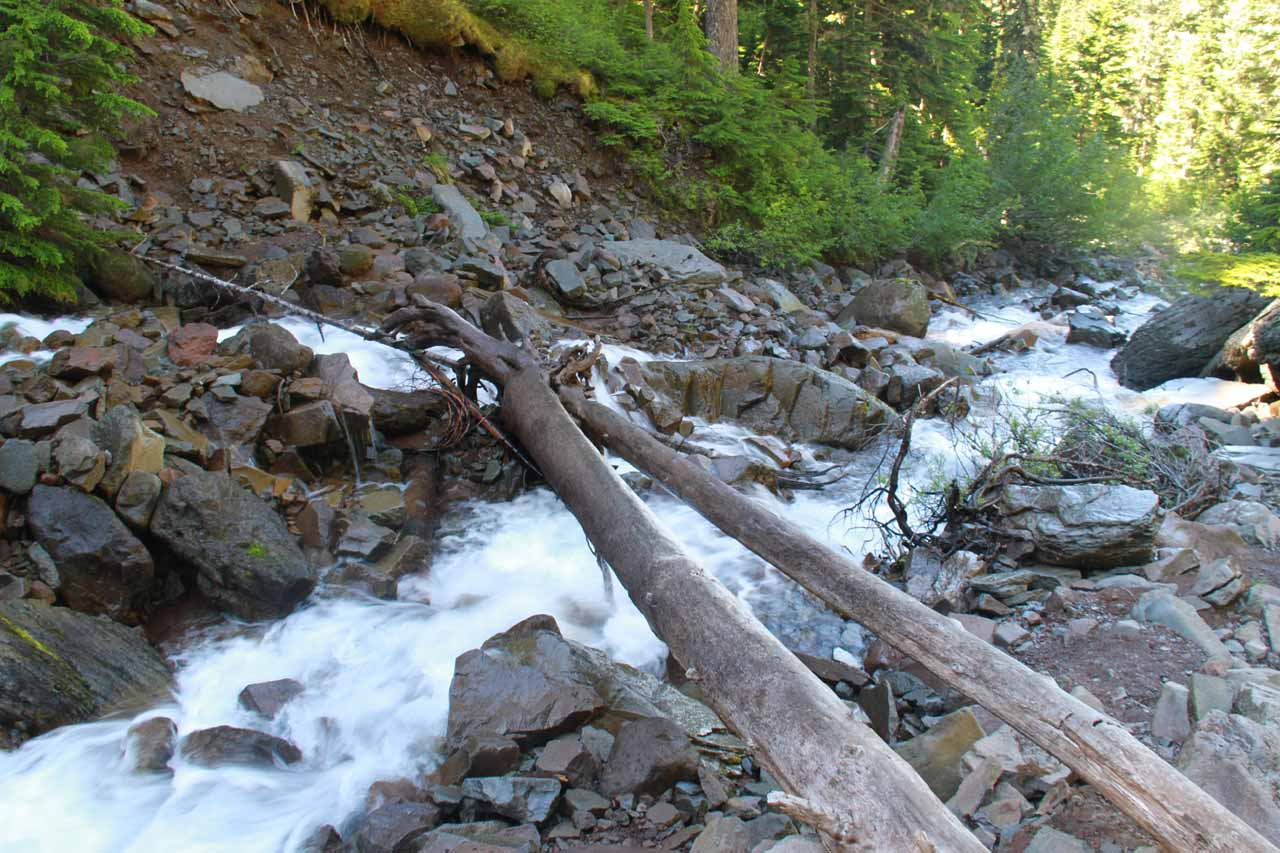 The tree trunks that I utilized to get across the rushing Spray Creek