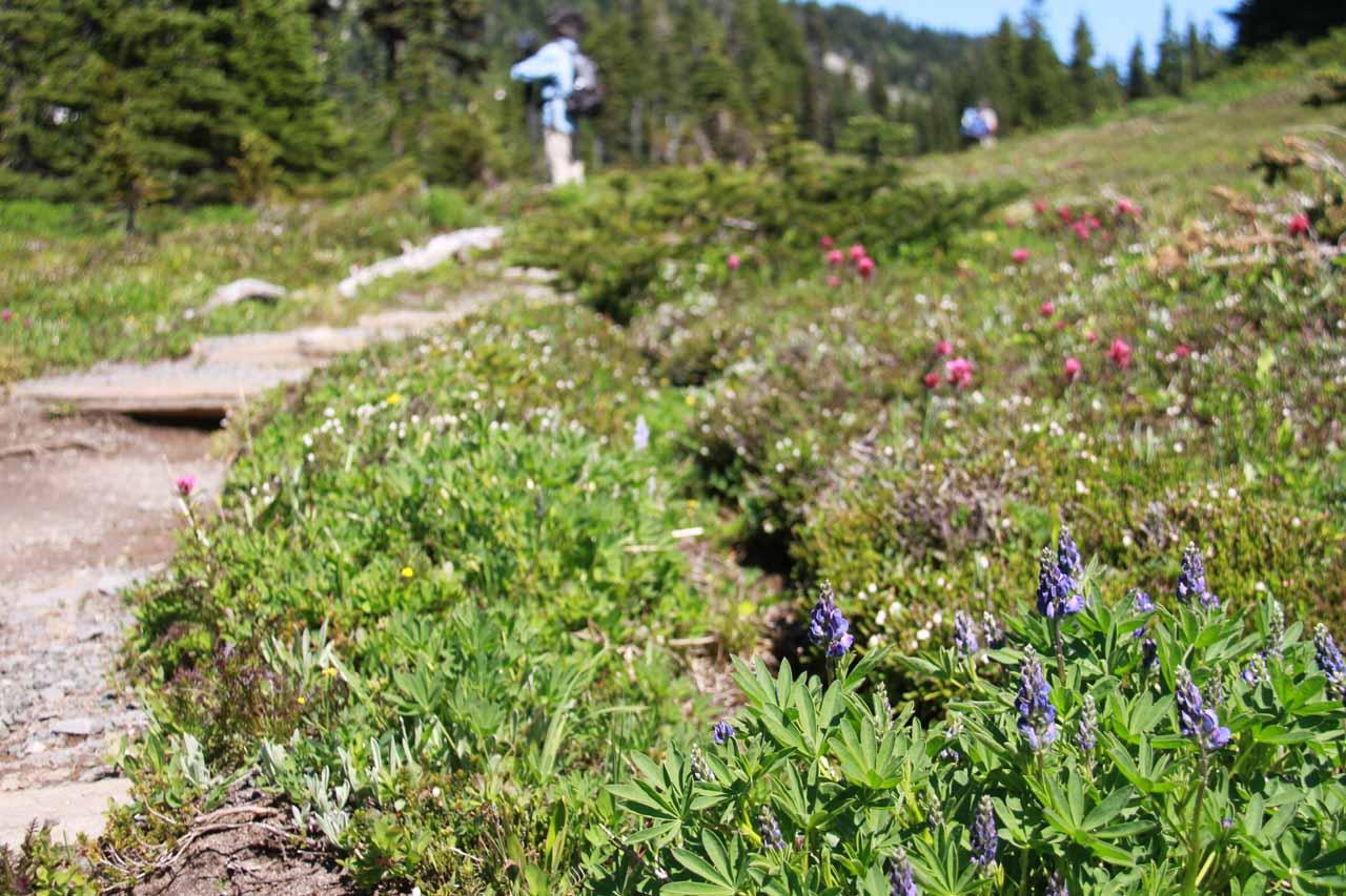 Wildflowers at Spray Park