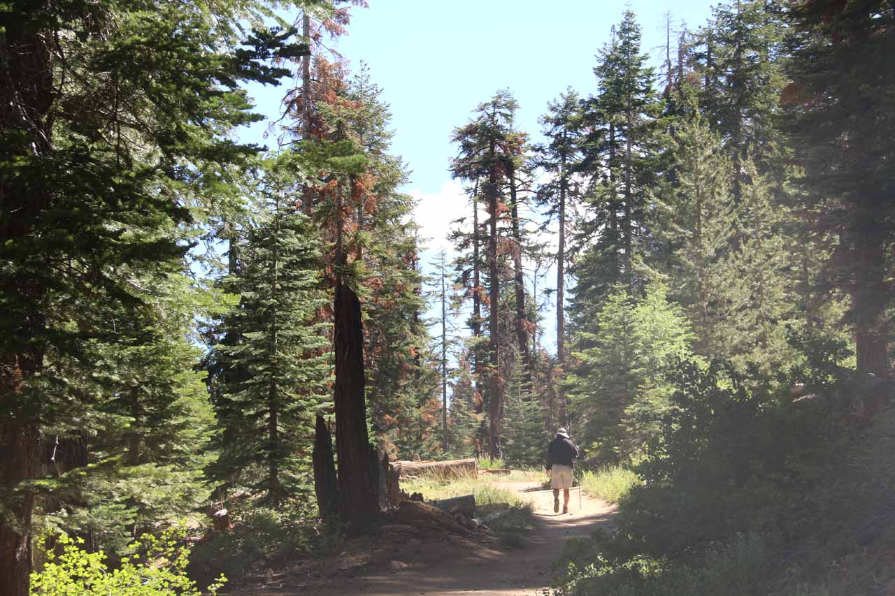 Dad on the well-forested and easy trail to Rancheria Falls