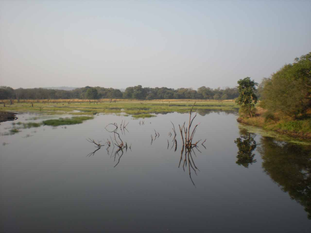 A calm wetland in Ranthambore
