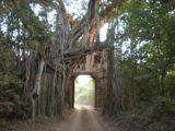 Ranthambore_032_jx_11072009 - Entering zone 2